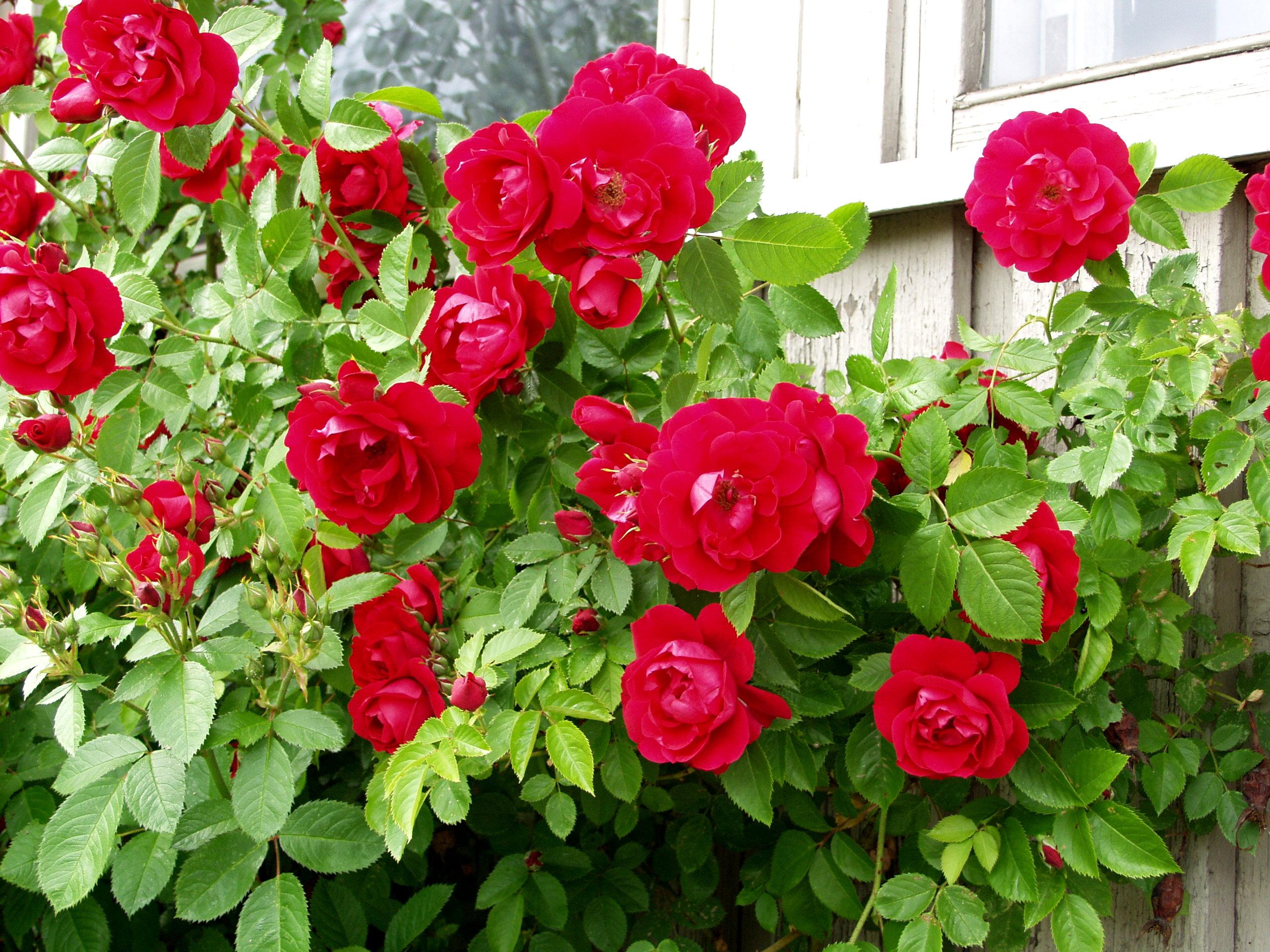 Kuva Ella Räty 16.6.2002 Hki Bot